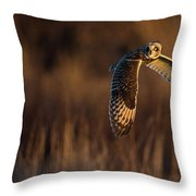 Short-eared Owl Banking Throw Pillow