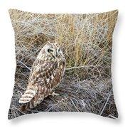 Short Eared Owl Throw Pillow by Michael Chatt