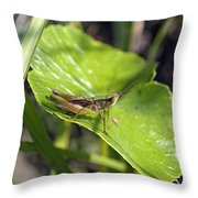 Short Winged Green Grasshopper Throw Pillow