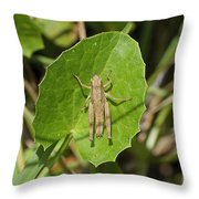 Shortwinged Green Grasshopper Throw Pillow