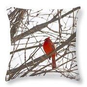 Showing His Colours - Northern Cardinal - Cardinalis Cardinalis Throw Pillow