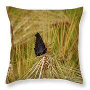 Showing The Dark Side. European Peacock On Barley Throw Pillow