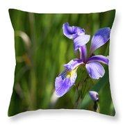 Shreve's Iris Throw Pillow