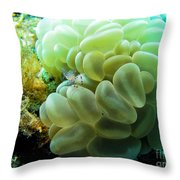 Shrimp On Soft Coral Throw Pillow