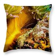 Shrimp Vogue Throw Pillow
