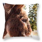 Shy Burro In Cripple Creek Throw Pillow