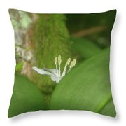 Shy Flower  Throw Pillow
