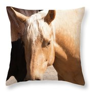 Shy Horse Throw Pillow