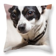 Shy Lonely Mini Fox Terrier Dog Laying On A Bed Throw Pillow