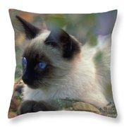 Siamese Cat Hiding Throw Pillow