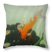 Siamese Fighting Fish 1 Throw Pillow