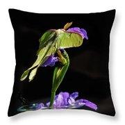 Siberian Iris And Luna Moth Throw Pillow