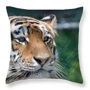 Siberian Tiger 2 Throw Pillow
