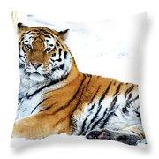Siberian Tiger Amur Tiger Throw Pillow