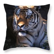 Siberian Tiger Executive Portrait Throw Pillow