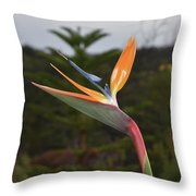 Side View Of A Beautiful Bird Of Paradise Flower  Throw Pillow