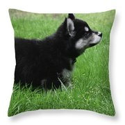 Side View Of A Two Month Old Alusky Pup Throw Pillow