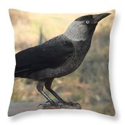 Side View Of A Wild Jackdaw Throw Pillow