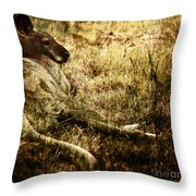 Siesta Throw Pillow