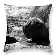 Siesta At Valdez Peninsula Throw Pillow