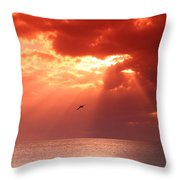 Siesta Key Pelican Throw Pillow