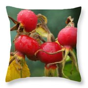 Signs Of Fall 2 Throw Pillow