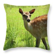 Sika Deer Omagh Throw Pillow