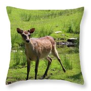 Sika Deer Water Hole Omagh Throw Pillow