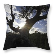 Silhouette Of A Gnarled Tree Throw Pillow