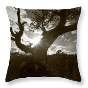 Silhouette Of A Gnarled Tree - Sepia Throw Pillow