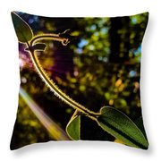 Silhouette Of Climbing Vine On A Sunny Afternoon Throw Pillow