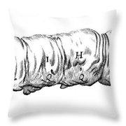 Silkworm, Malpighi, 1686 Throw Pillow
