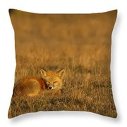 Silly Fox Throw Pillow