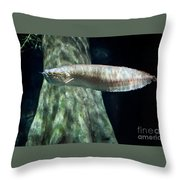 Silver Arowana Fish In Paludarium Throw Pillow