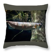 Silver Arowana Fish In Zoo Throw Pillow
