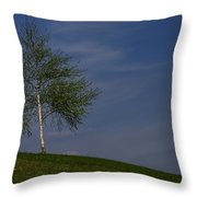 Silver Birch Tree Throw Pillow