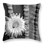 Silver Desert Jewel Throw Pillow