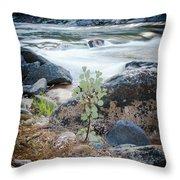 Silver Fork Manzanita Throw Pillow
