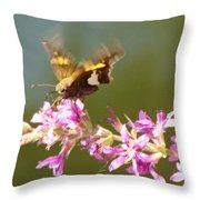 Silver Spotted Skipper Landing On Blooms                 August               Indiana Throw Pillow