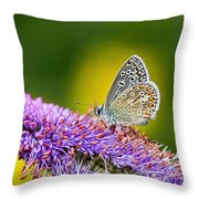 Silver-studded Blue Butterfly Throw Pillow