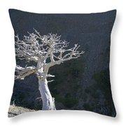 Silver Tree Glacier Park Montana Throw Pillow