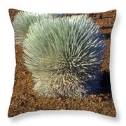 Silversword Wildflower Throw Pillow