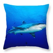 Silvertip Shark In Thailand Throw Pillow