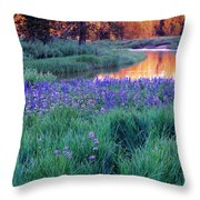 Silvery Lupine Throw Pillow
