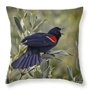 Sing Me A Song, Red-winged Blackbird Throw Pillow
