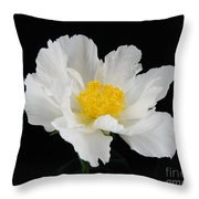 Singel White Peony Magnificence Throw Pillow