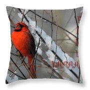 Singing Cardinal Christmas Card Throw Pillow