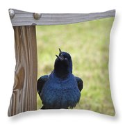 Singing Grackle Throw Pillow