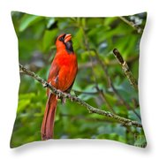 Singing His Song Throw Pillow