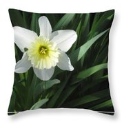 Single Daffodil Throw Pillow